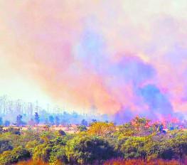 नागपुर यूनिवर्सिटी कैंपस के पीछे 250 एकड़ में लगी भीषण आग
