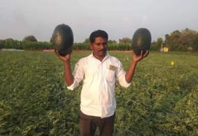 किसान ने तरबूज से जीवन में घोली मिठास, 72 दिन में रिकार्ड उत्पादन