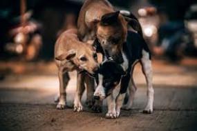 कुत्तों को पहाड़ी पर ले जाने से रोक मामले में हाईकोर्ट ने वन विभाग से मांगा जवाब