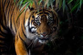 लोकसभा : Bor tiger reserve के वन्यजीवों से सुरक्षा के लिए योजना बनाने की मांग