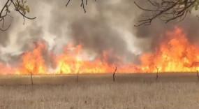 आग से तबाही, सेमरा के 8 किसानों की फसल खाक