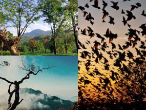 भारत का वो गांव,जहां पक्षी करते हैं आत्महत्या,रहस्यमयी ताकतों का हैं प्रकोप