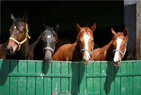 इस देश में घोड़े की दवा बनी कोरोना वैक्सीन ! लोग कर रहे इस्तेमाल
