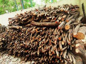 कोरोना से होने वाली मौतों की वजह से कई गुना बढ़ी जलाऊ लकड़ी की खपत, वन विभाग ने जारी किया अलर्ट