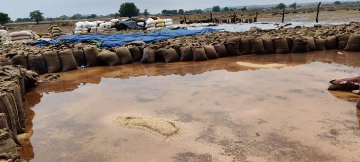 बिजली गिरने से डिंडौरी, शहडोल व बालाघाट में एक-एक की मौत - कटनी-दमोह में भीगा 70 हजार क्विंटल गेहूं