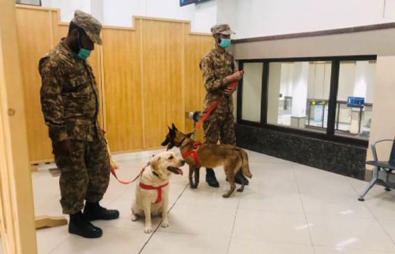 ट्रेन्ड डॉग्स ने पेशावर एयरपोर्ट पर 24 यात्रियों में कोरोना की पहचान की, विरोध के बावजूद सभी को क्वारंटीन किया गया