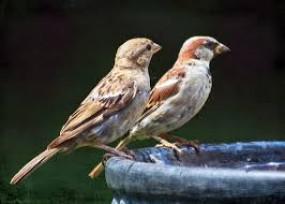 पड़ोसी के एतराज के बाद अदालत ने चिड़ियों को दाना डालने से रोका