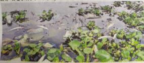 सूपाताल और हनुमानताल में जल प्रदूषण पर एनजीटी में आवेदन दायर
