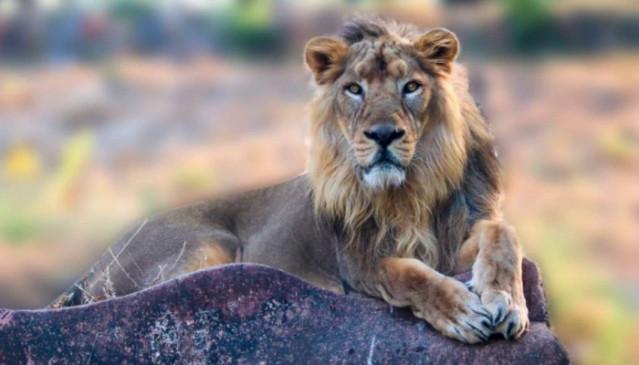 चेन्नई के चिड़ियाघर से आई बुरी खबर, 4 शेरों में पाया गया कोरोना का घातक डेल्टा वेरिएंट