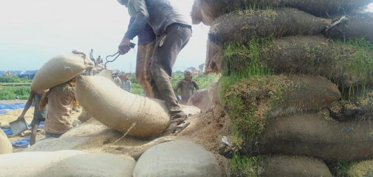 अनूपपुर, सिवनी, मंडला और दमोह में भी सड़ रहा है 258 करोड़ रुपए का धान