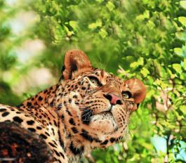 जंगलों के घटते दायरे के चलते 7 माह में 20 वन्यजीवों की मौत