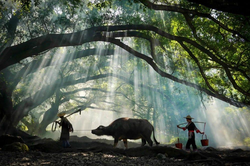 फर्जी फोटोज के जरिए चीन ने की टूरिस्ट्स को लुभाने की कोशिश, पर्यटकों ने खोली पोल