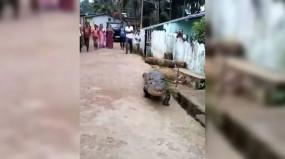 Karnataka: कोगिलाबन्ना गांव की सड़कों पर आया मगरमच्छ, फिर... देखें वीडियो