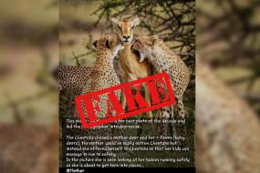 चीता और हिरण की इस हरकत ने फोटोग्राफर को डिप्रेशन में डाला, जानें क्या है इस वायरल तस्वीर का सच