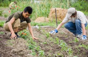 कृषि पाठ्यक्रमों के विद्यार्थियों को फीस में मिलेगी छूट - भुसे