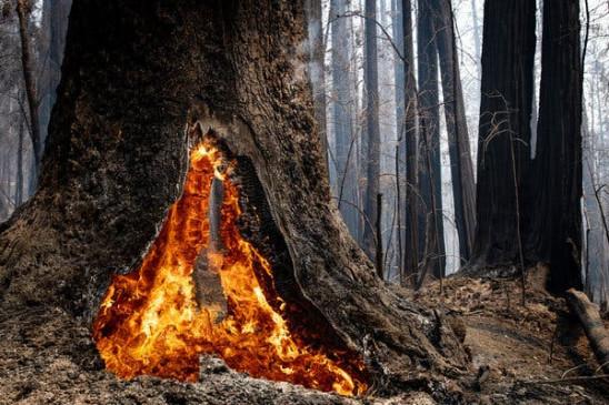 आश्चर्य: एक ऐसा पेड़ जो डेढ़ साल से है आग के चपेट में, देखकर सब हुए हैरान