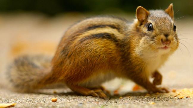 अब गिलहरियों पर मंडराया बीमारी का खतरा, अमेरिका में गिलहरियों में मिला संक्रमण, पर्यटन प्रतिबंधित