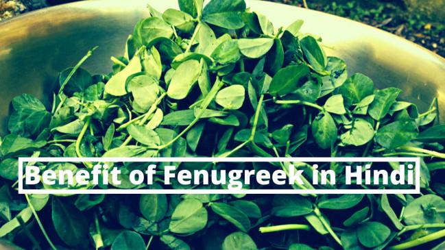 मेथी दाने (Fenugreek Seeds) के फायदे जानकर आप हो जायेंगे हैरान