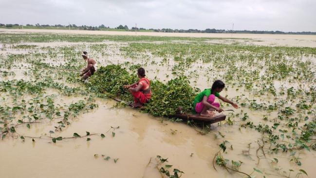 बाढ़ ने पशुपालकों की बढाई परेशानी, जुगाड़ की नाव से खेतों में पहुंच काट रहे चारा
