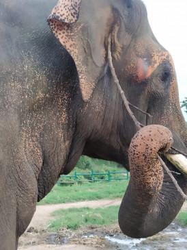 गुवाहाटी के पास जंगली हाथियों ने भाजपा नेता राजीव बोरो को मार डाला