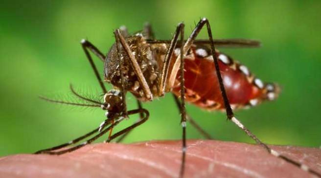 मासूम को डेंगू - मैदानी अमले ने किया औपचारिक सर्वे, मरीज का जबलपुर में हुआ इलाज