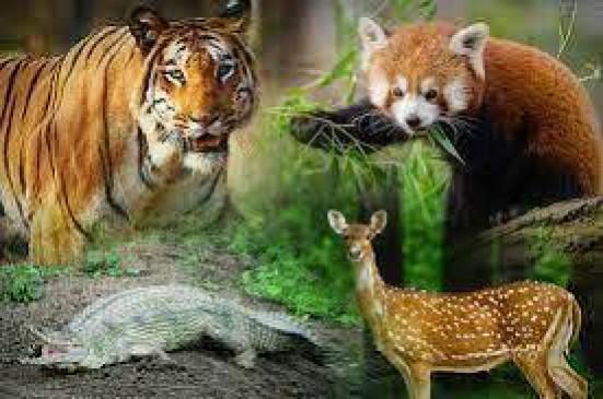 वन्यजीवों के संवर्धन के लिए हुई बैठक, पशु चिकित्सक भी पहुंचे